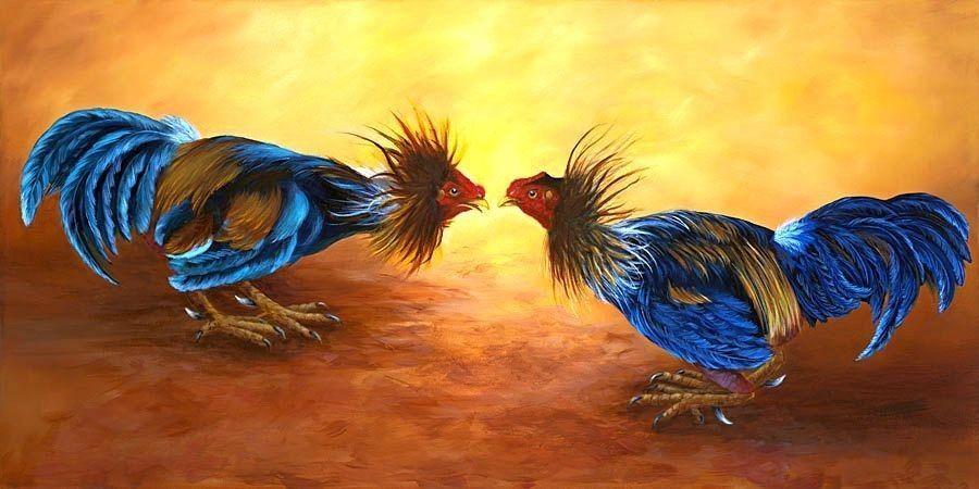 Customer Service Sabung Ayam